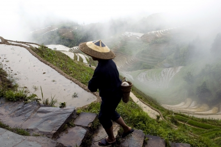 Peasant walking in terraced rice fileds covered with water. China, Guangxi province, Longshan village near Guilin.