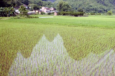 Rice fields with reflections in China, Guilin city, Yangshou town - small villages surrounded by green rice fields and hills. Beautiful scenery of Guilin. photo