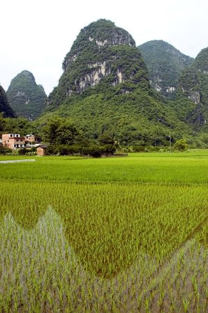 Rice fields in China, Guilin city, Yangshou town - small villages surrounded by green rice fields and hills. Beautiful scenery of Guilin. photo