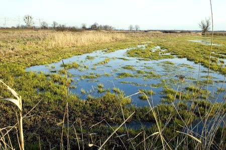 wetness: Poland landscape, wet meadow near Wroclaw city, first green grass in spring season. Stock Photo