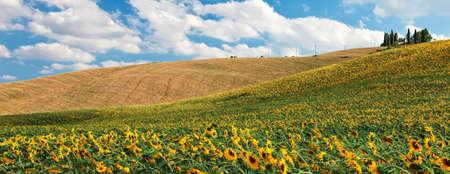 over the hill: Campo girasol sobre hill en Toscana, paisaje de tierras de cultivo en verano. Foto de archivo