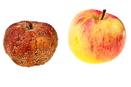 Two apples fresh, tasty and a rotten one isolated over white background. photo
