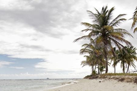 Landscape tropical beach in Carribean photo