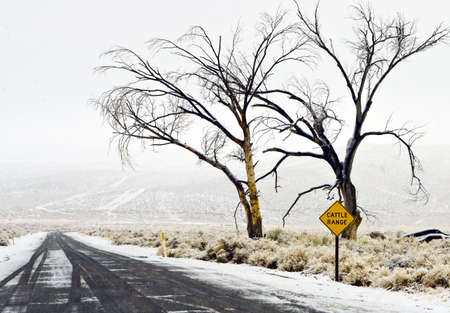 Light snow covers a rural  road and cattle range in California