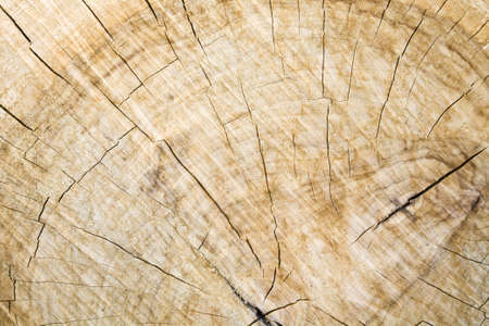 Wood grain and cracks on crosscut log