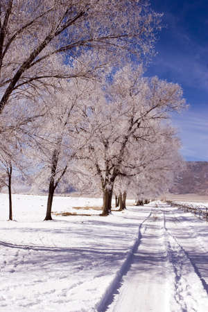 Snowy rural dirt road in the White Mountains of California