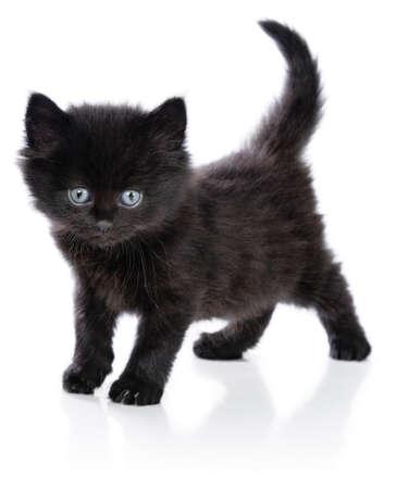 Black little kitten standing up on a white background