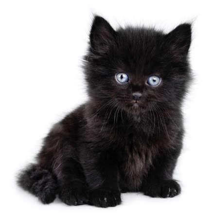 Black little kitten sitting down on a white background