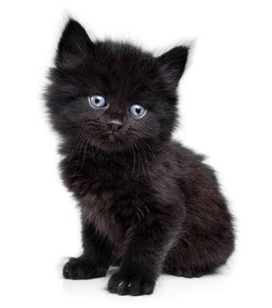 블랙 작은 새끼 고양이는 흰색 배경에 앉아