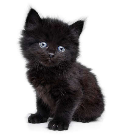 Black little kitten sitting down a on a white background
