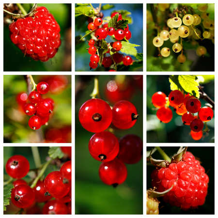 red currant: Composition of red currant, yellow currant and raspberry Stock Photo