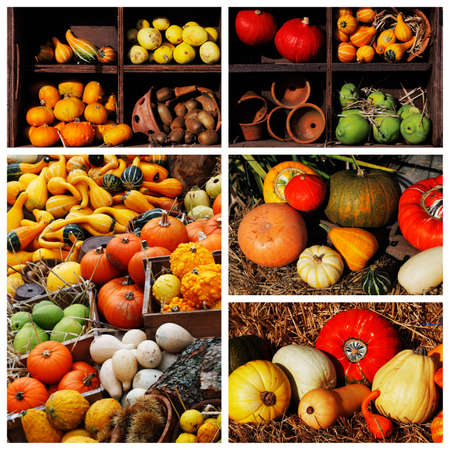large pumpkin: Composition of pumpkins and summer and winter squashes