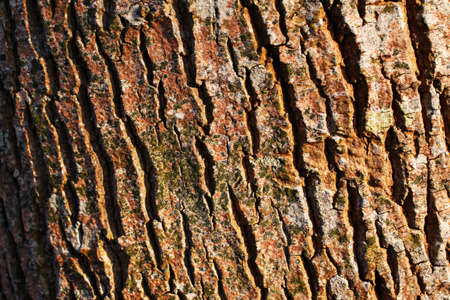 corrosion: A close-up picture of a tree bark
