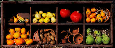 wallace: A composition of pumpkins and summer and winter squashes