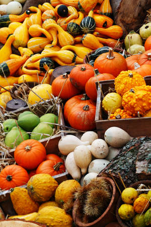 max: A composition of pumpkins and summer and winter squashes
