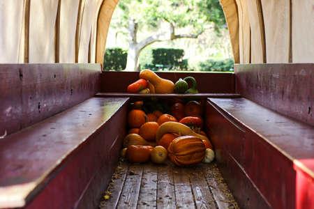 Pumpkins Reklamní fotografie