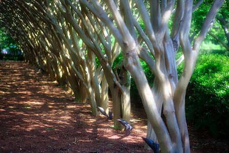Fall Shaded Trees In A Row