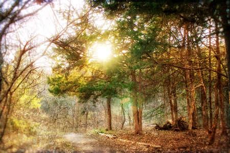 wildwood: Trees