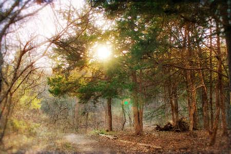 timberland: Trees
