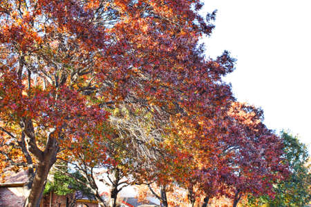 timberland: Tree