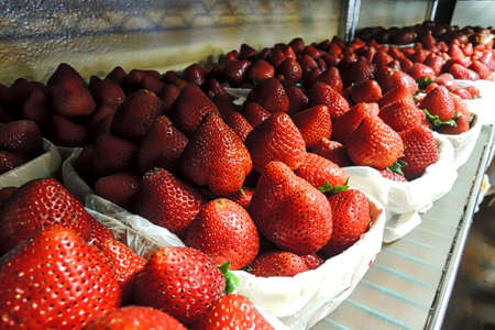 vegtables: Strawberries