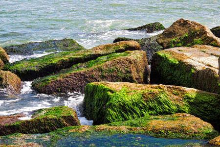 bayou: Ocean Stock Photo