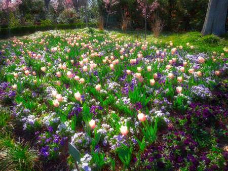 Charmant Fall Garden Flowers Stock Photo   59768900