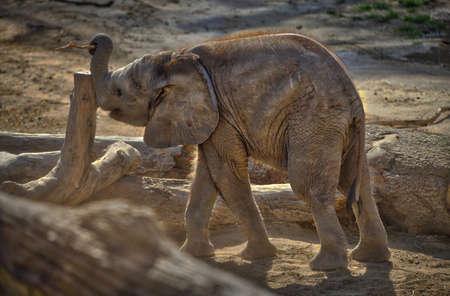 Elephant Reklamní fotografie