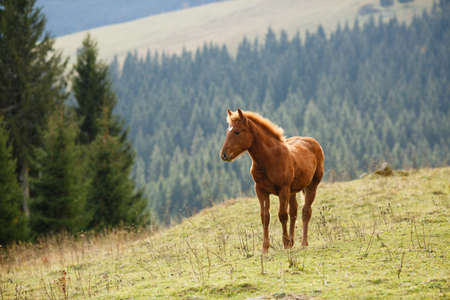 Brown horse grazing on the lawn with background of mountains on summer sunny day