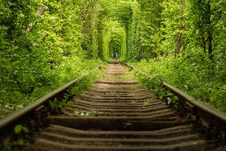 Das wahre Naturwunder Tunnel der Liebe, geschaffen aus Waldbäumen entlang der Eisenbahn in der Ukraine, Klevan. Standard-Bild