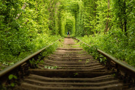 The real natural wonder Tunnel of Love created from forest trees along the railway in Ukraine, Klevan. Banque d'images