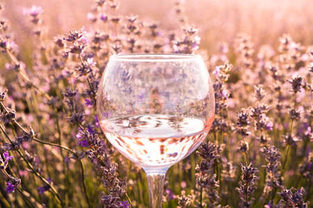 Closeup of glass with wine at lavender fields on background, purple and violet flowers at sunset, provence