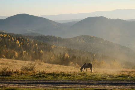 A horse grazes in the foreground. Dust from the road