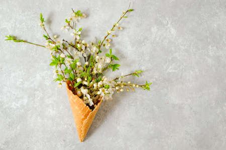 Branches of blooming cherry in a waffle cone on a gray background. View from above, copy space. Concept spring