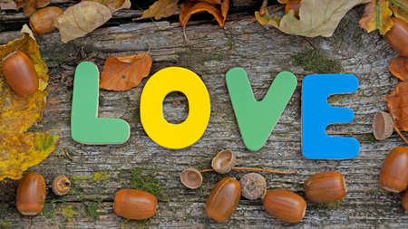 Love writen in the autumn nature photo