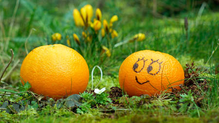 Funny fruit in the nature photo