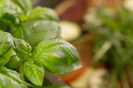 Fresh Basil infront of pizza Stock Photo