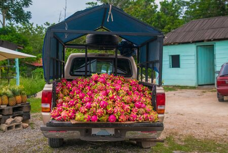 Roadside fruit stand with fresh dragon fruit loaded on back of a pickup truck.