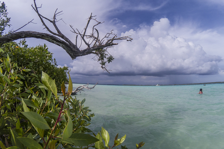 Mangrove tropical coastline with turquoise lagoon