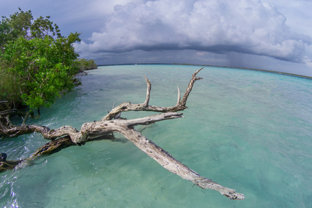 Bacalar Lagoon in Mexico, with dry driftwood and Turquoise Waters