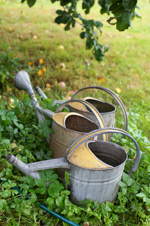Three Watering cans under an apple tree.
