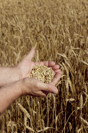 Man holding grain.