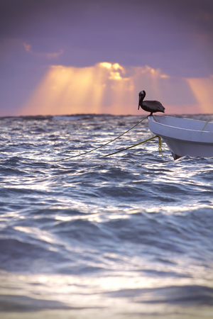 Pelican resting on a small fishing boat at dawn.