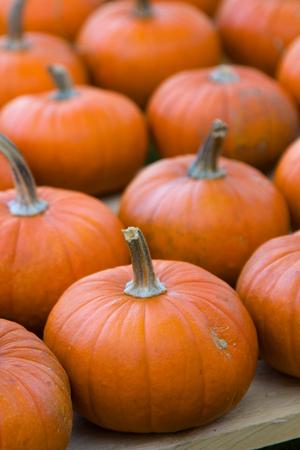 Large group of pumpkins.