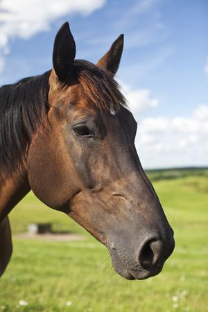 Horse posing fr the camera in a field. Reklamní fotografie