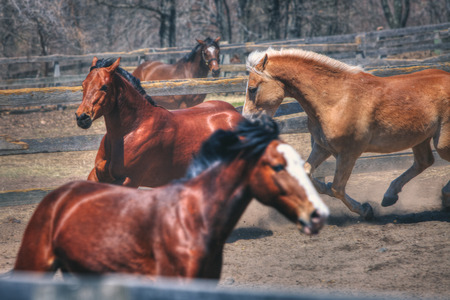 Playful Horses at Stables