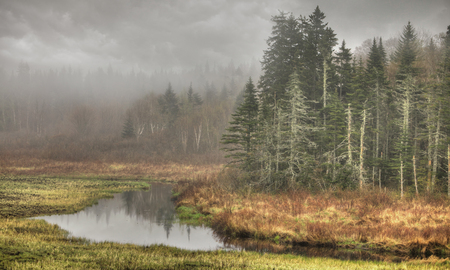 Small creek and fog in the early morning hours. Maine, USA. HDR Image.