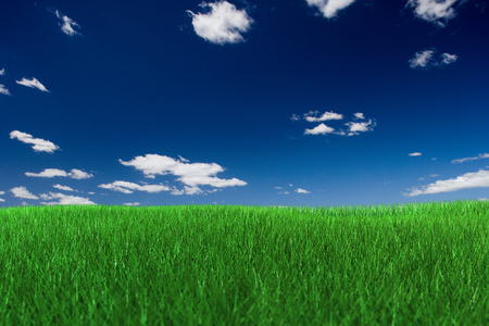 Green grass field with clipping PATH (for grass only). Фото со стока