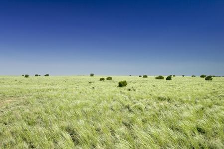 Mid-western grasslands