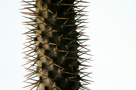 Detail of spiky cactus